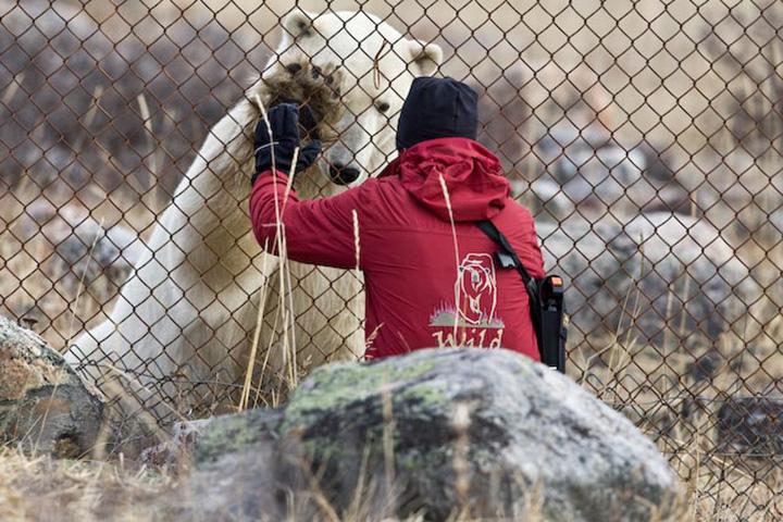 Polarbären Fotografenreise