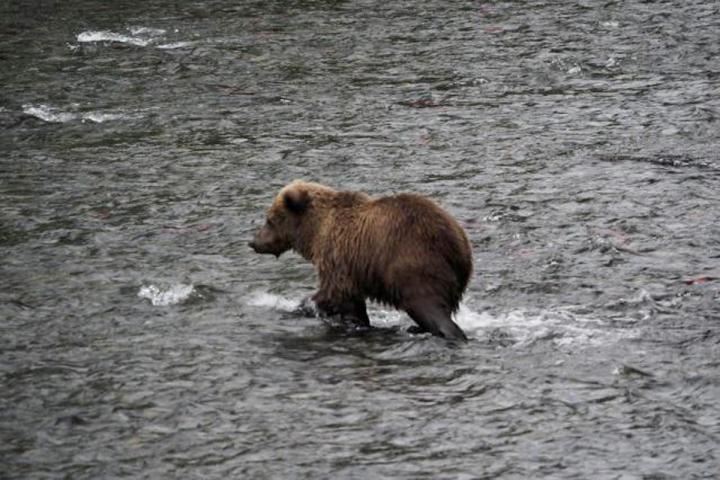 Abenteuer im Yukon und Alaska