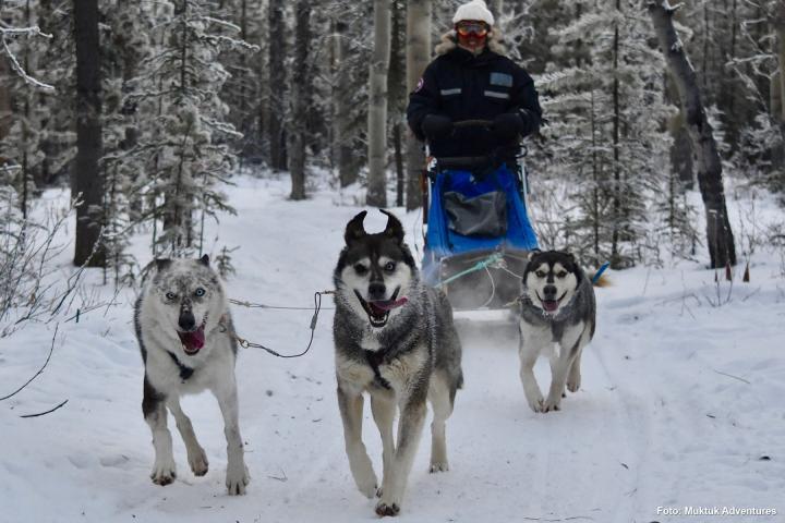Nordlichter und Huskies