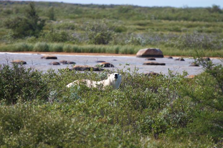 Manitobas Wildtiere