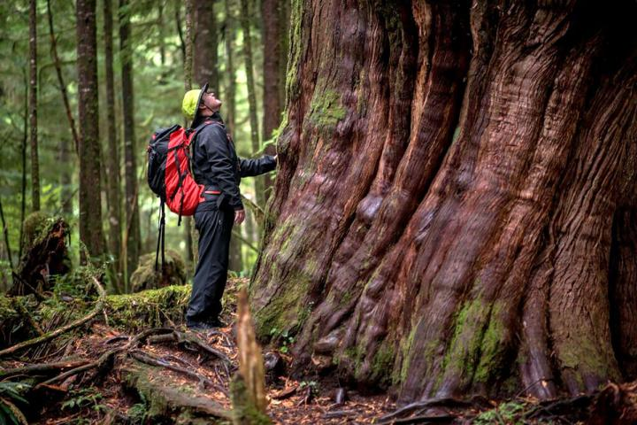 Wandern auf Vancouver Island