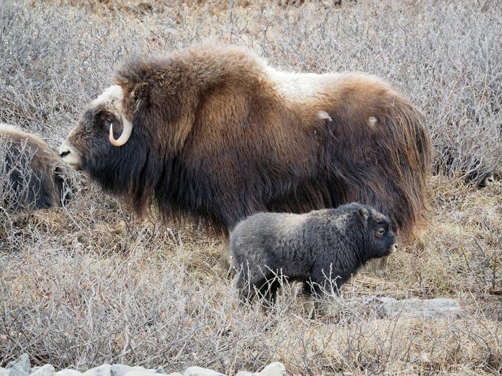 Teil 2: Nordkanadas Tierwelt!