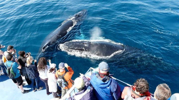 Wale vor St. John's