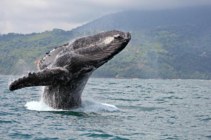 Sankt Lorenz Whale Watching
