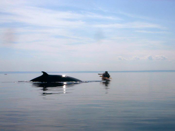 Whale Watching per Kajak