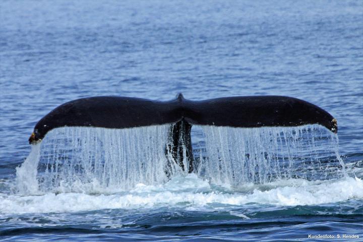 Whacky Whale
